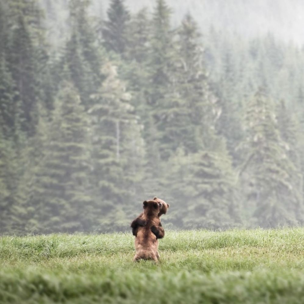 BC Bear Day 2019