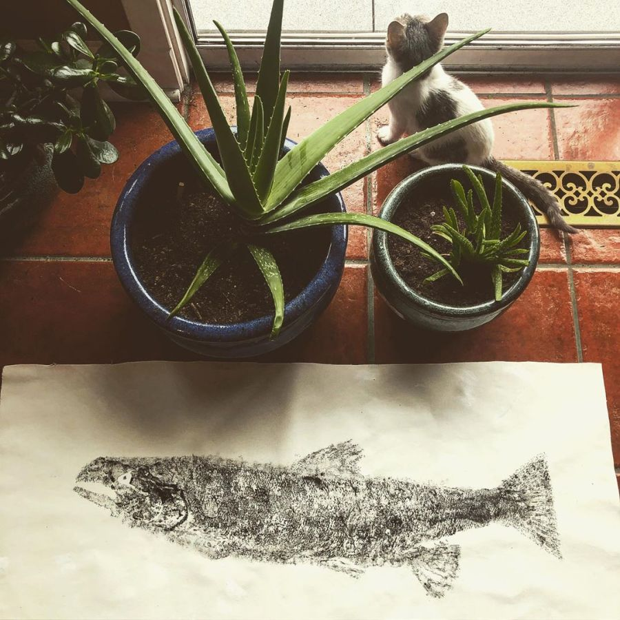 Grey and white kitten sits near a window staring out, partially hidden by two cactus plants in pots. In the foreground is a black and white print of a salmon, the paper resting on red tile.
