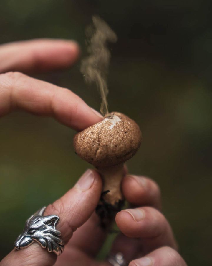 Part of a hand wearing a silver wolf motif ring visible holding a mushroom. The pointer finger is pressing down on the centre of the mushroom and a tendril of smoke is rising from the centre of the mushroom, comprised of mushroom spores