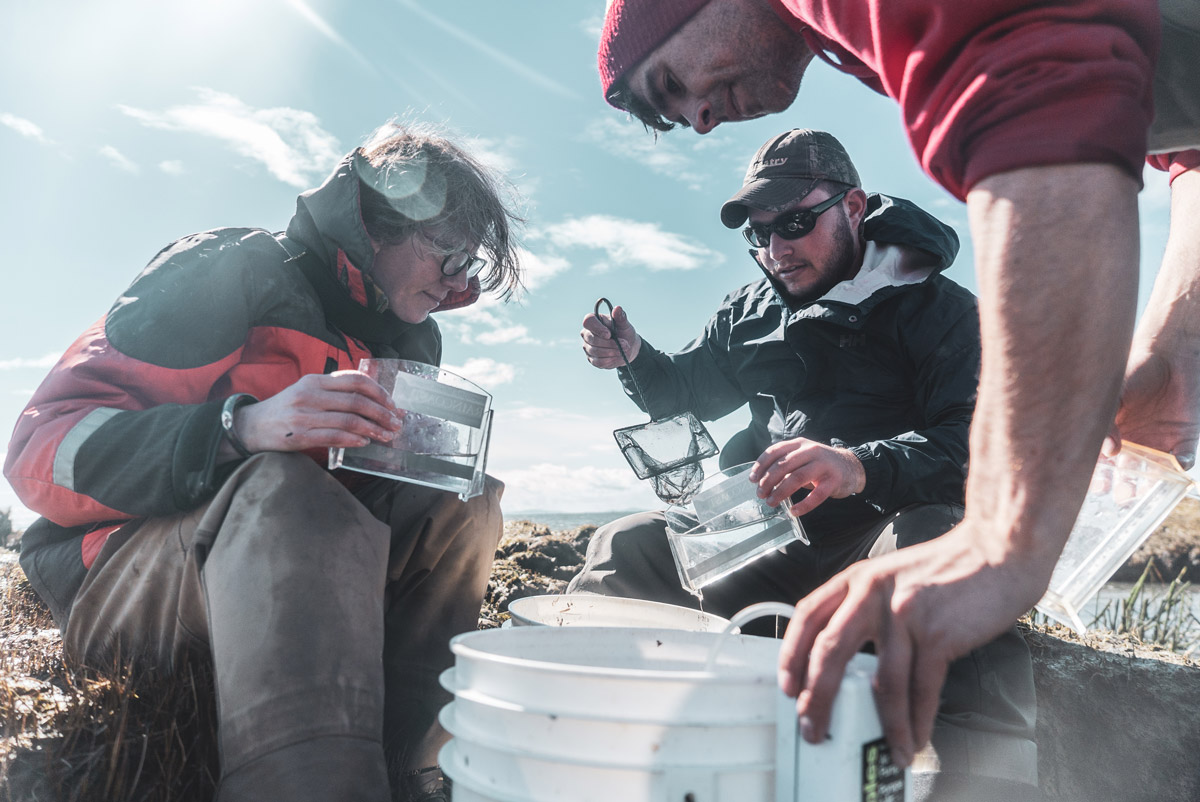Three scientists in outdoor gear inspect and fish out live fish from white buckets using a small net, into container boxes under a blue sky besides the water.