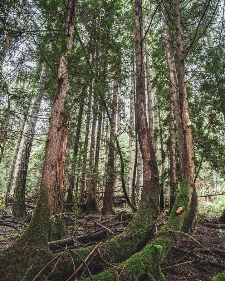 Tall trees stand leaning towards each other in a grove