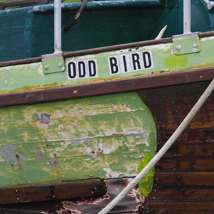 'Odd Bird' written on green painted wooden beam