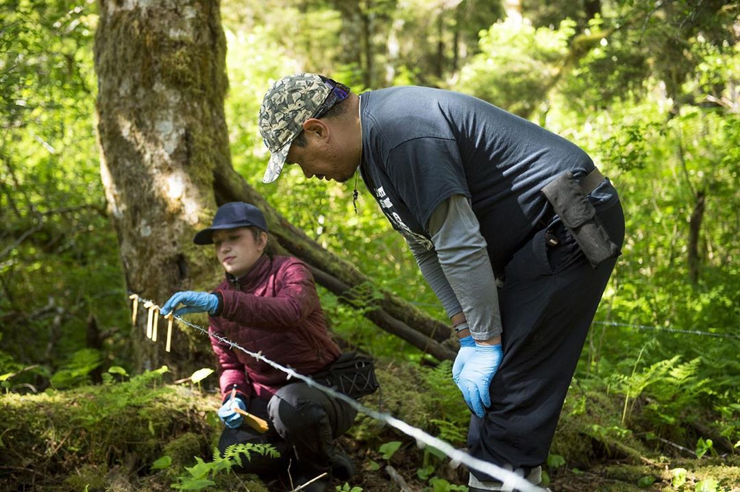 A male standing bent at the knees in black clothing and grey cap and a woman kneeling down in deep red clothing and black cap both wearing pale blue gloves inspect a trip wire with bear samples in a forest, trees and green leaves visible behind them