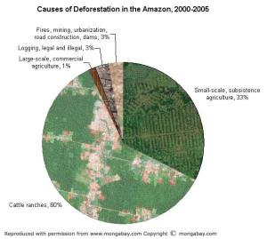 Keeping the Carbon in the Rainforests | Rainforest Saver