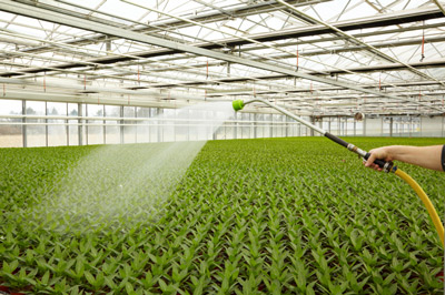 commercial glasshouse