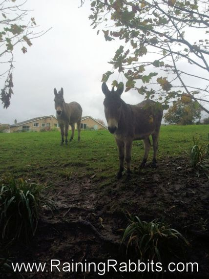 Donkeys on the Isle of Wight