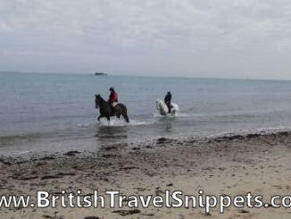 Horses trotting through sea