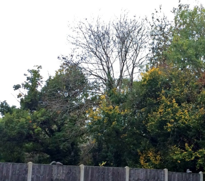 Autumn trees and two squirrels scuttling along a garden fence