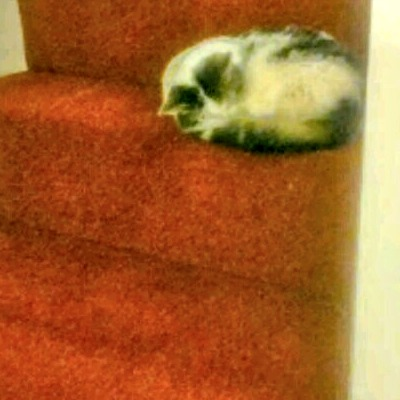 tabby cat curled up on the stairs