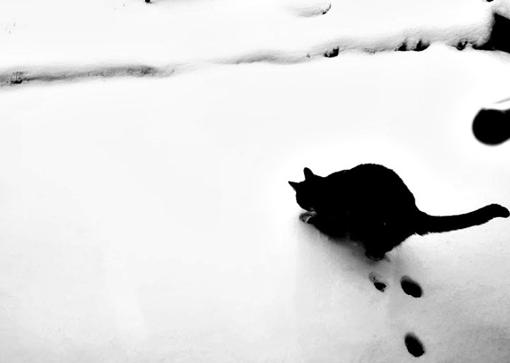 a black cat contrasted against the white snow