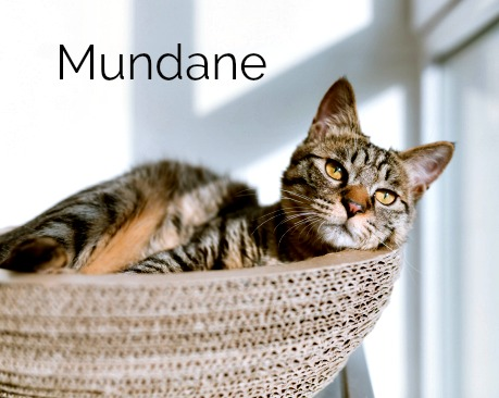 a cat looking bored sitting in a basket, and the word mundane