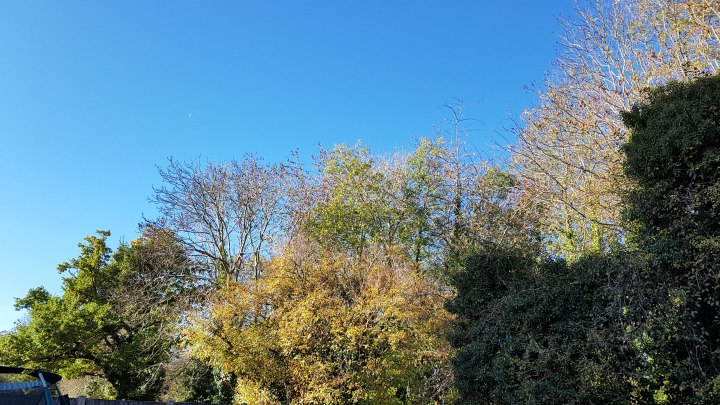 Autumn trees at the bottom of my garden losing their leaves.
