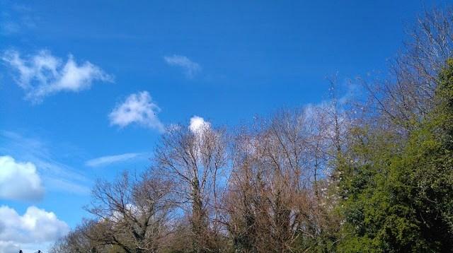 tall trees against a blue sky