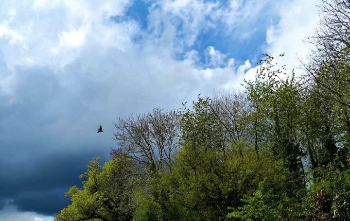 Tall trees against a cloudy sky