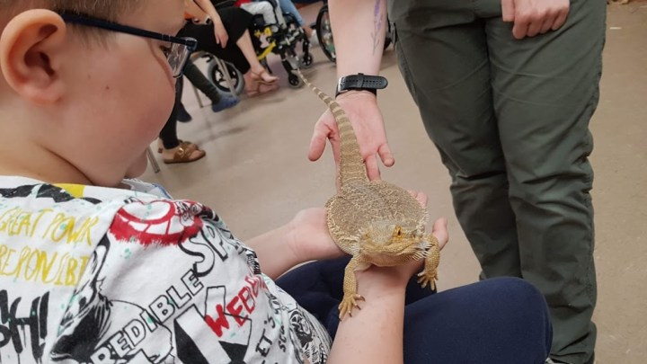 a bearded dragon being held by the little man