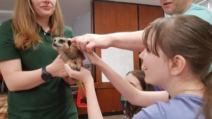 Star and Daddy stroking the meerkat