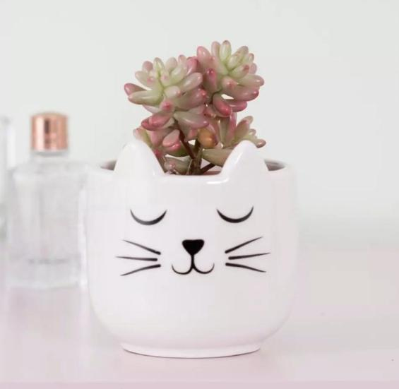 Image shows white ceramic pot with a sleeping cat face and planted with a small succulent.