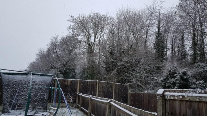 snow in my garden