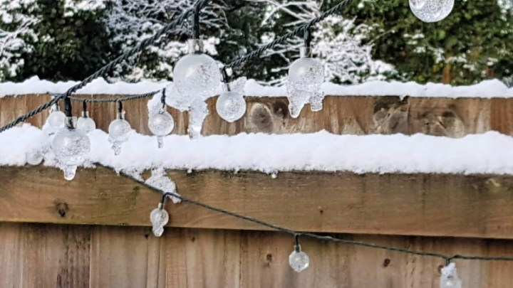 photograph of garden fairy lights covered in snow and ice in the vanilla swarm