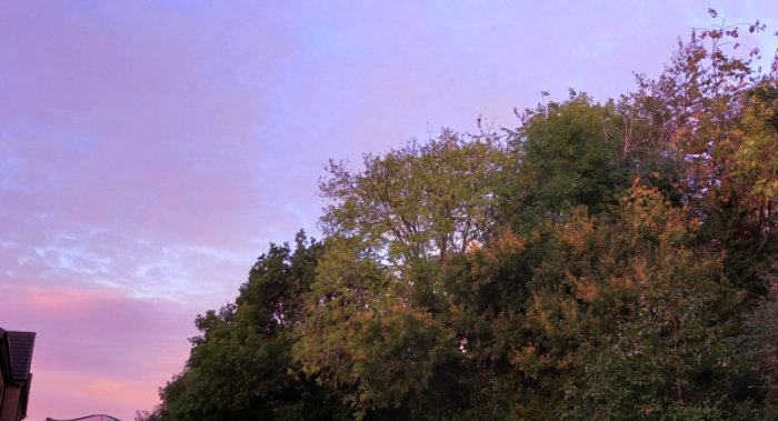 pink sky in the morning.