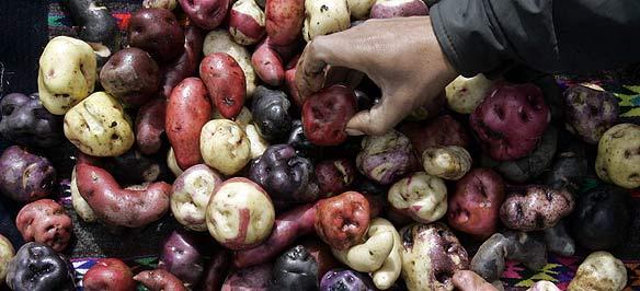 Image result for peru potato