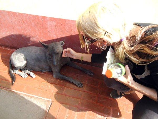 lainie_trujillo_puppy
