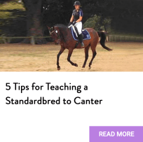 teach standardbred canter