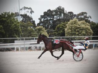 standardbred pacer