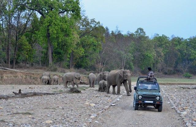 Image result for rajaji national park