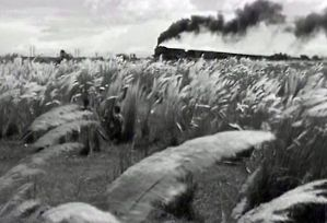 View of a train through paddy fields