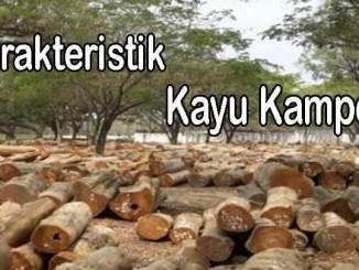 karakteristik kayu kamper 2