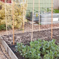 Super Simple Pea Trellis
