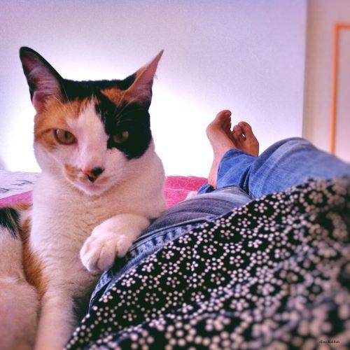 chat trois couleurs allongé regard pensées