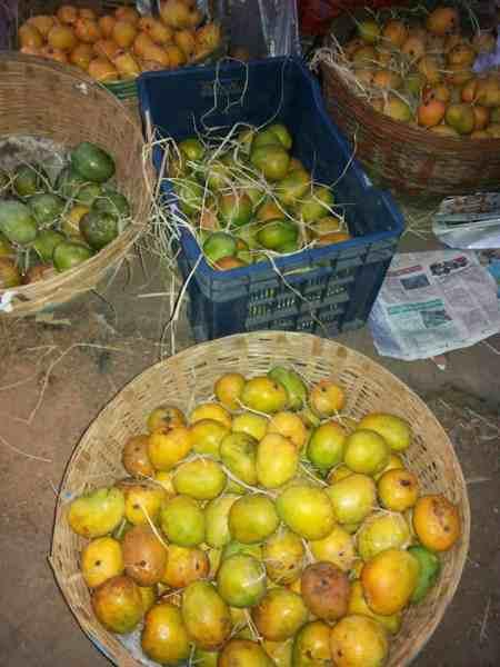 Mangoes in Goa