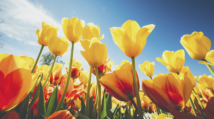 15 Reasons to Love Spring Explained in GIFs
