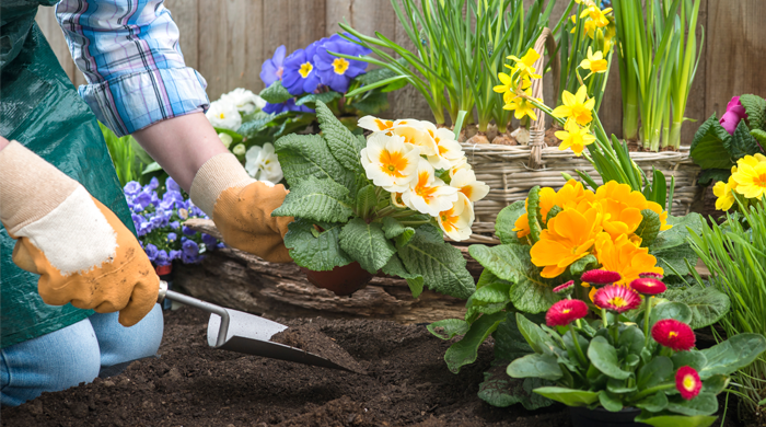 Planting flowers in the front yard