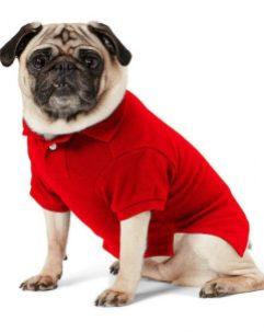 Ralph Lauren Big Pony Cotton Dog Polo