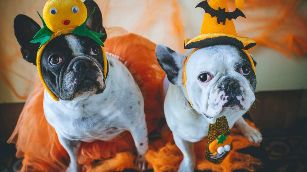 10 Adorable Pet Costumes for Your Furry Friend