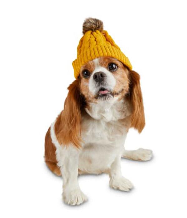 Bond & Co. Furry Pom-pom Mustard Dog Beanie