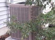 York YHJF