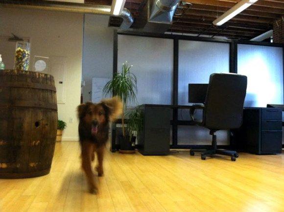 Nugen at Office