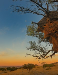 Namibia Moon over Africa