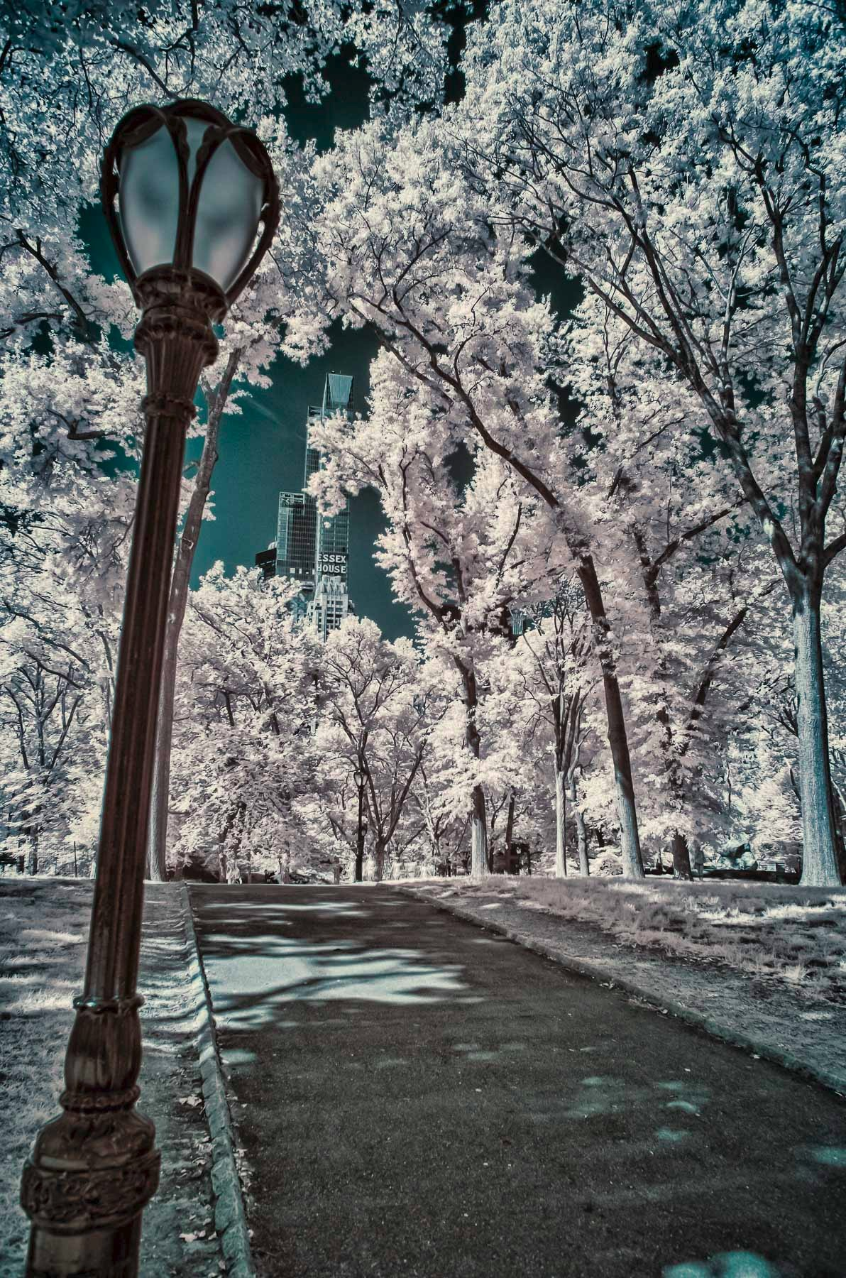 New York City infrared - Central Park