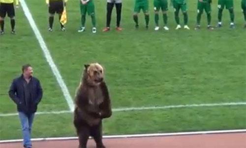 Panda-Fussball-Kussen