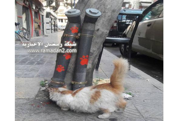 Halab-Syria-Katzen-3