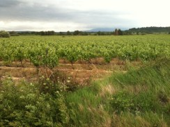 Vineyards.