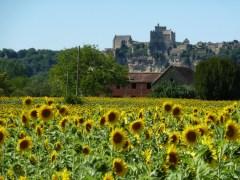 Sunflowers and Beynac.