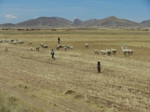 Herding on the Altiplano.