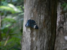 Moth on a tree.