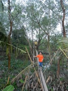 Crossing a bamboo bridge.